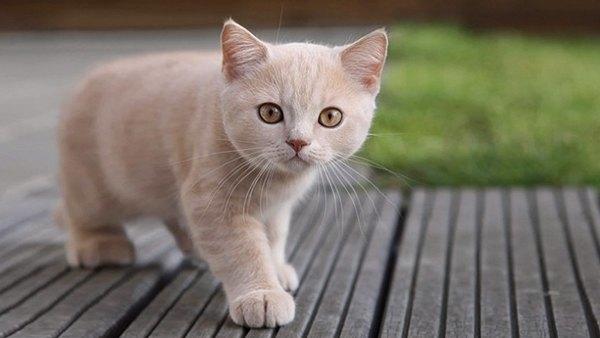 ¿Cuantos años viven los gatos?