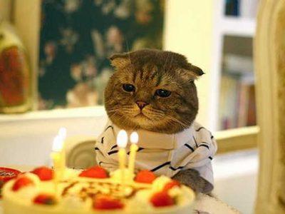 ¿Que edad tiene mi gato en años humanos?