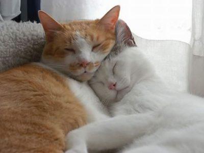 ¿Existen gatos homosexuales (gays)?