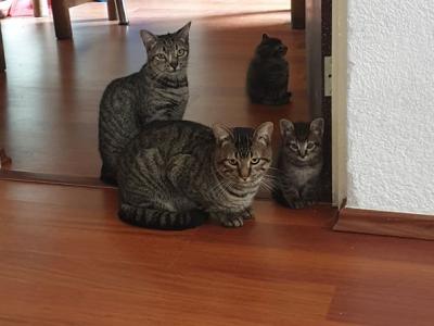 Viviendo con 7 gatos en un departamento – Consejos